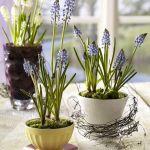 spring-flowers-new-ideas-muscari5.jpg