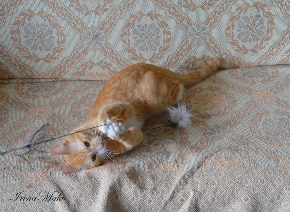 Котячьи поигрушки, фото № 3