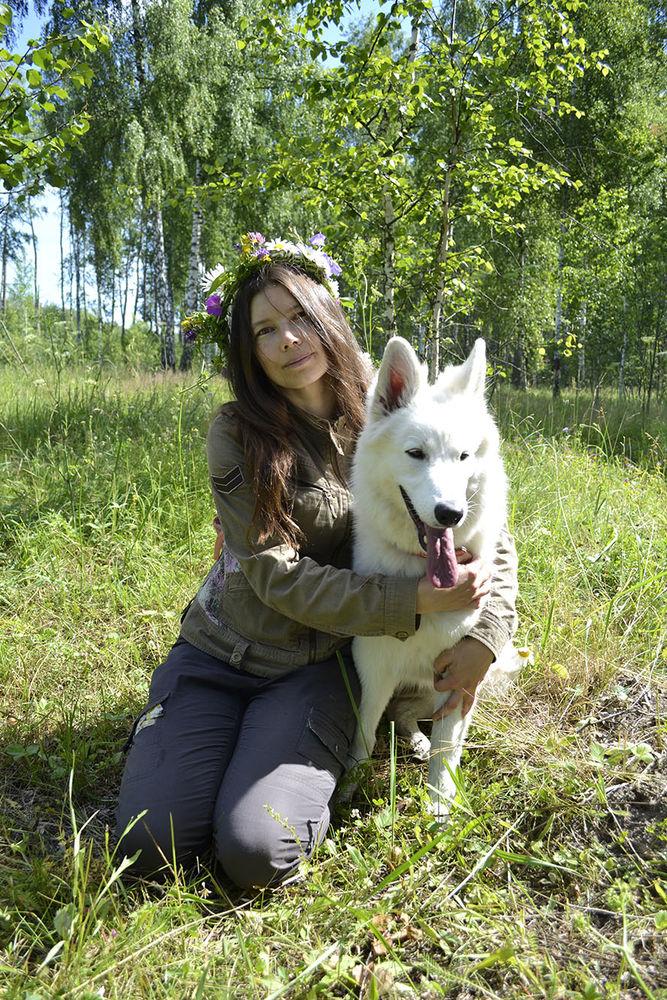 бшо, белая овчарка, собаки, собака, собачка, собачники, моя собака, теплое пространство, картины с собаками