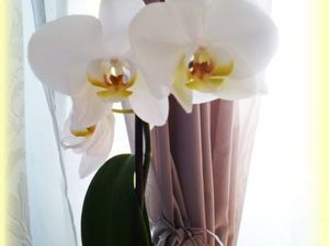 Мои орхидеи. Ярмарка Мастеров - ручная работа, handmade.