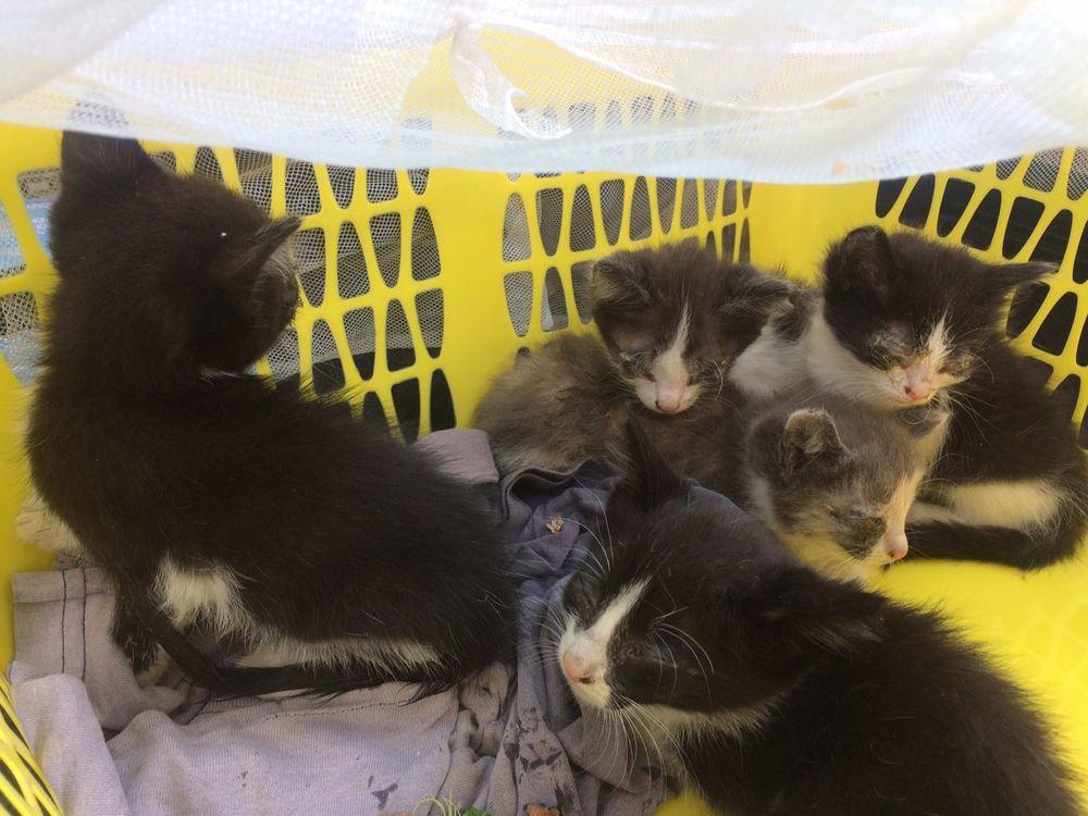 благотворительная акция, помощь кошкам