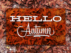 Махровые радости! Осень - вторая весна!. Ярмарка Мастеров - ручная работа, handmade.