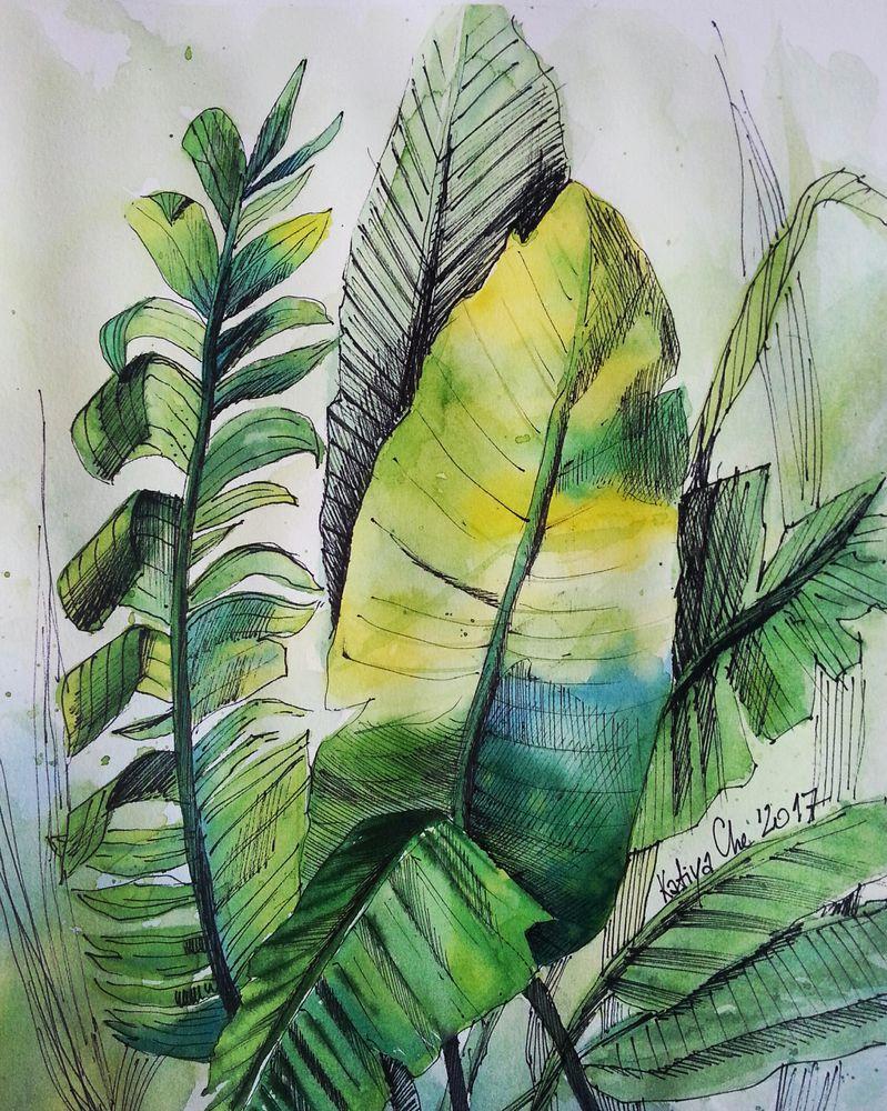 зелень, листья, скетч, набросок, папоротник, рисунок, зарисовка
