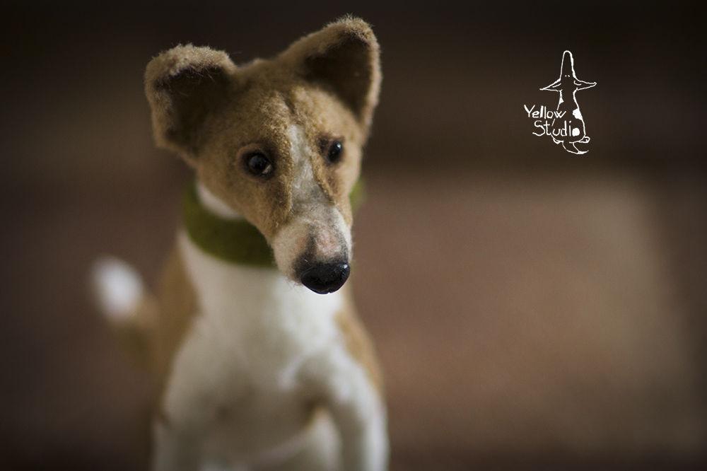 Моня собак, фото № 8
