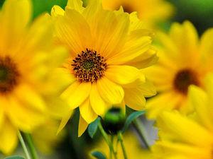 """Первый летний """"Солнечный цветочек"""" — моя новая работа!. Ярмарка Мастеров - ручная работа, handmade."""