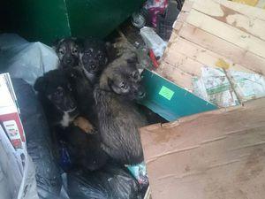 Сбор денег на вольер щенкам!13-ый благотворительный аукцион в поддержку бездомных животных | Ярмарка Мастеров - ручная работа, handmade