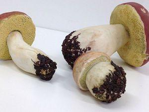 Натуралистичные грибы - это ботаническая скульптура. | Ярмарка Мастеров - ручная работа, handmade