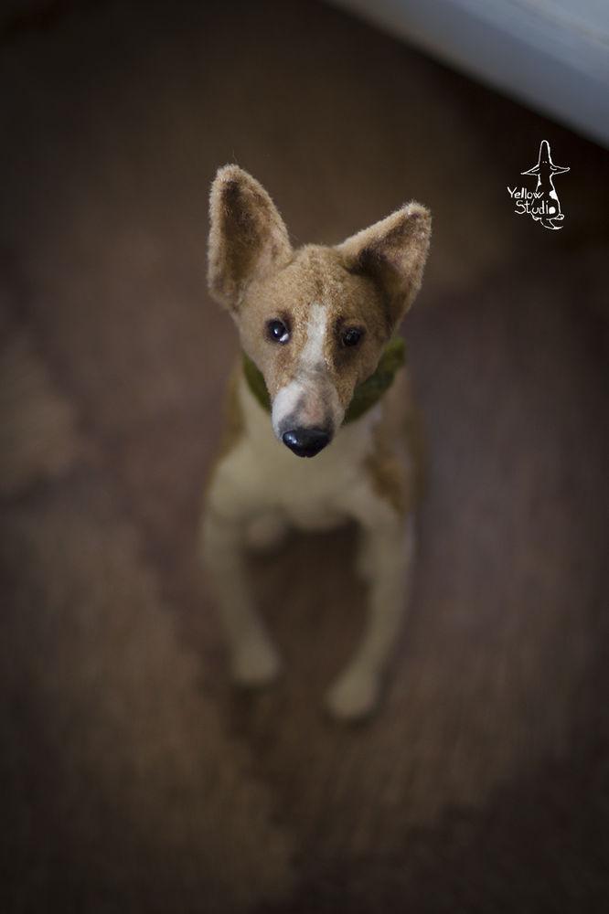 Моня собак, фото № 7