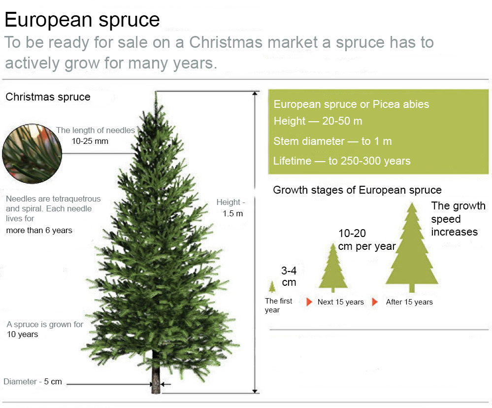 10 Interesting Facts About a Christmas Tree, фото № 6