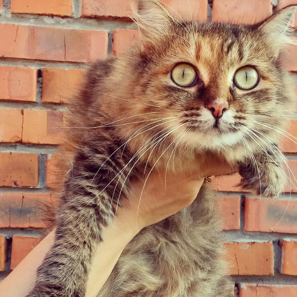 кошка ищет дом