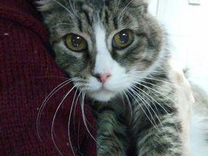 благотворительность, любовь, дружба, питомец, поддержка, помощь животным, помощь кошке