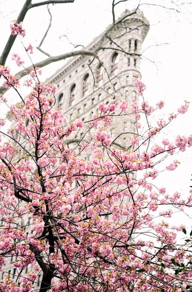 new york, нью-йорк, madison square