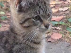Котят нужно спасти от гибели! На улице в дачном поселке им не выжить!. Ярмарка Мастеров - ручная работа, handmade.