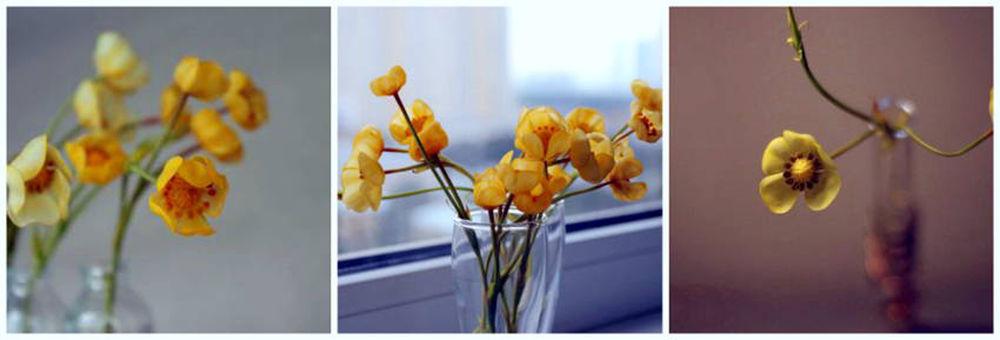 обечение, арт-студия, студия, арт-студия в москве, москва, обучение в москве, полимерная глина, полимерка, ботаника, декор, реалистичная флористика, цветы
