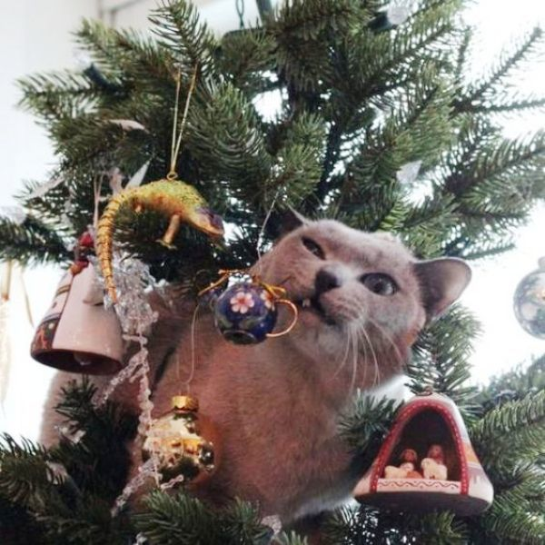 Christmas Cats! And a Little About the Safety of Pets During the Holidays, фото № 7