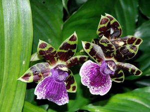 Орхидеи со скидкой!. Ярмарка Мастеров - ручная работа, handmade.