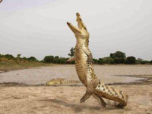 Изгибание кожи крокодила посредством вогнутых канавок и возможности кожаных узлов. Ярмарка Мастеров - ручная работа, handmade.
