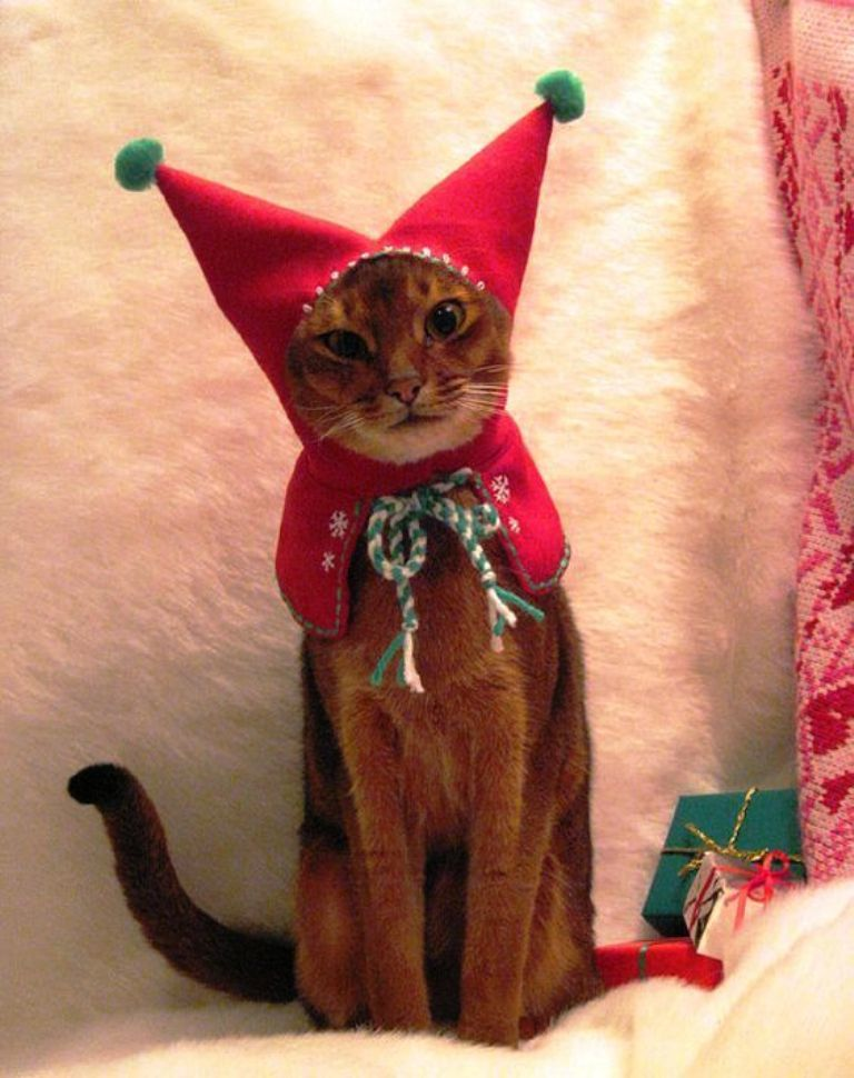 Christmas Cats! And a Little About the Safety of Pets During the Holidays, фото № 1