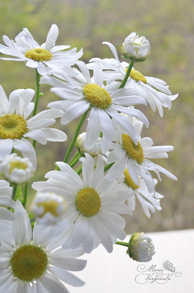 полевые цветы, букет из полимерной глины, цветок ромашки, самозатвердевающая глина