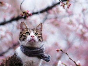 Котики в ожидании весны | Ярмарка Мастеров - ручная работа, handmade