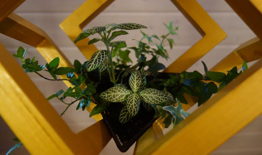 кубики, латунь, светильники из дерева, подвесной флорариум