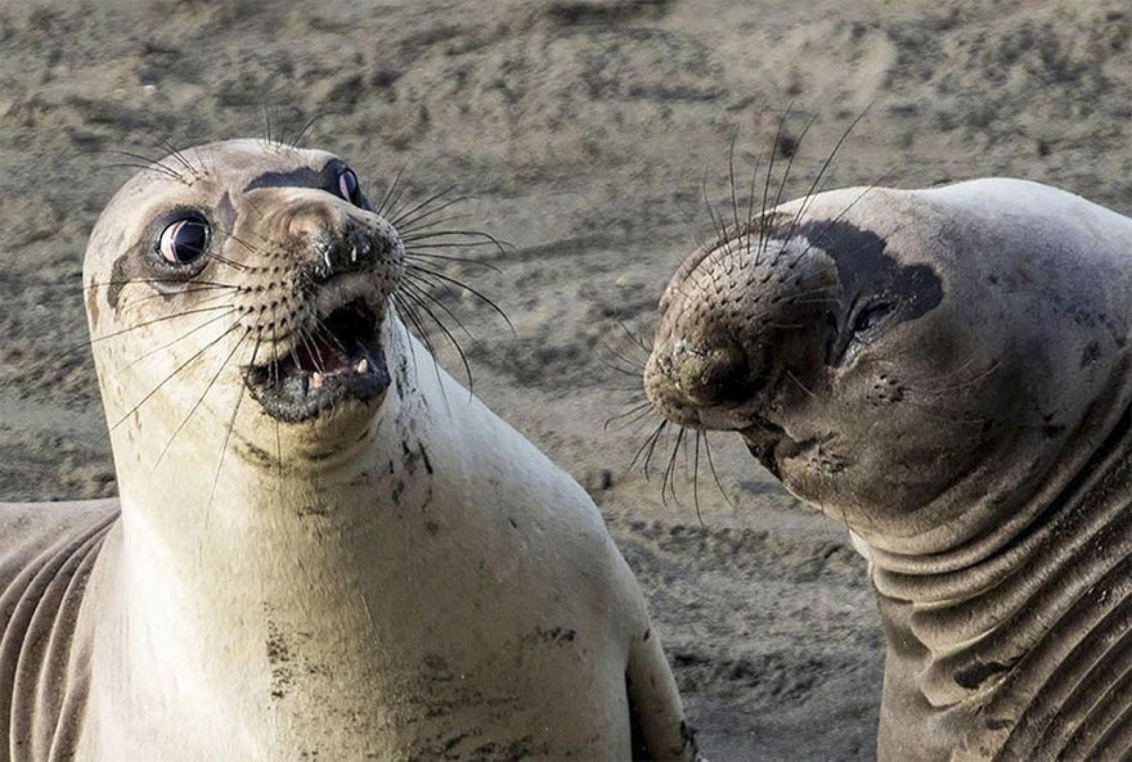 Самые смешные в мире животные