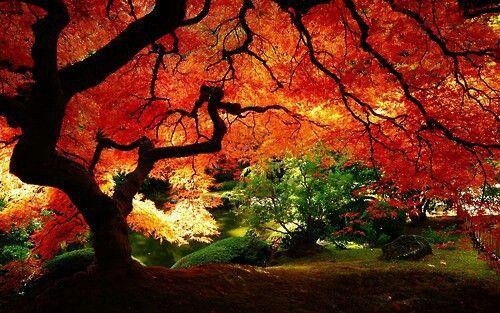 Fall Time