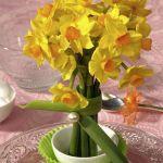 spring-flowers-new-ideas-narcissus5.jpg