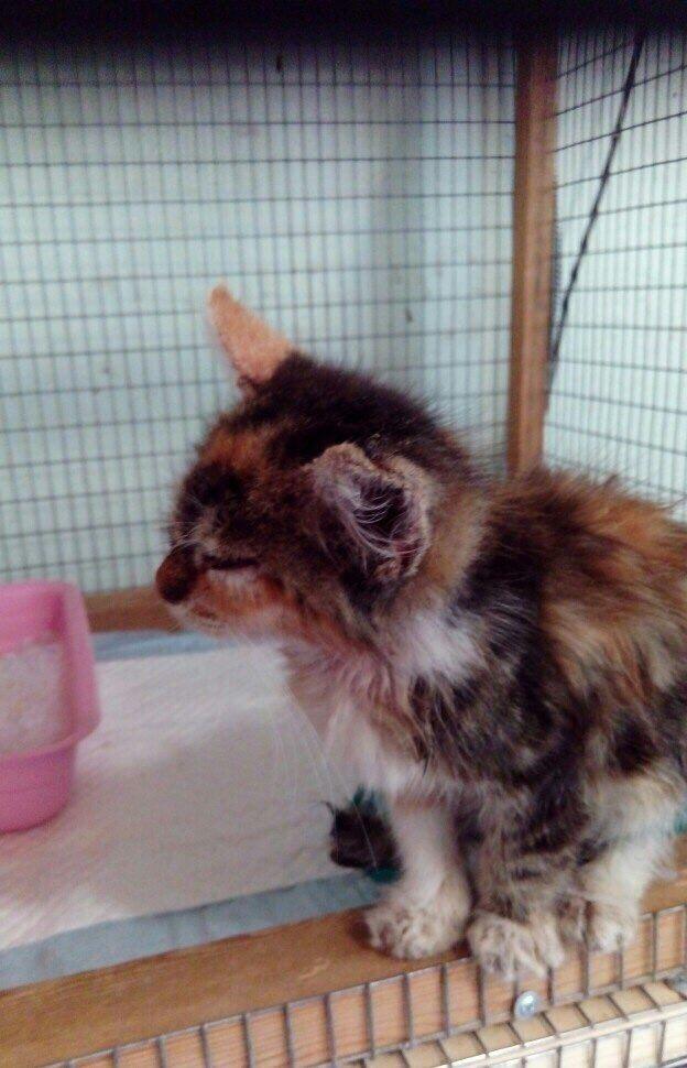 котенок, кошечка, помощь животным, лечение котенка