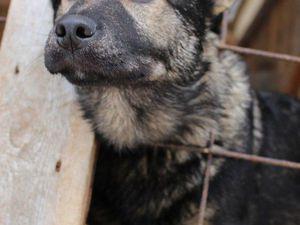 Сбор лотов для благотворительного аукциона в помощь бездомным животным | Ярмарка Мастеров - ручная работа, handmade