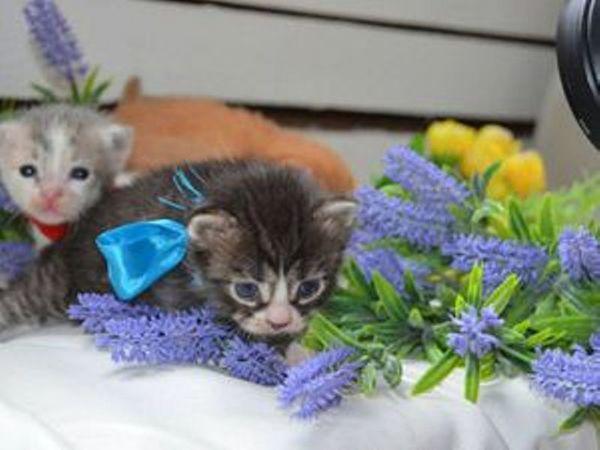 Марусино семейство. Котята ищут Дом! | Ярмарка Мастеров - ручная работа, handmade