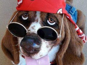 Очаровательные авторские собаки Алисы Шангиной. Ярмарка Мастеров - ручная работа, handmade.