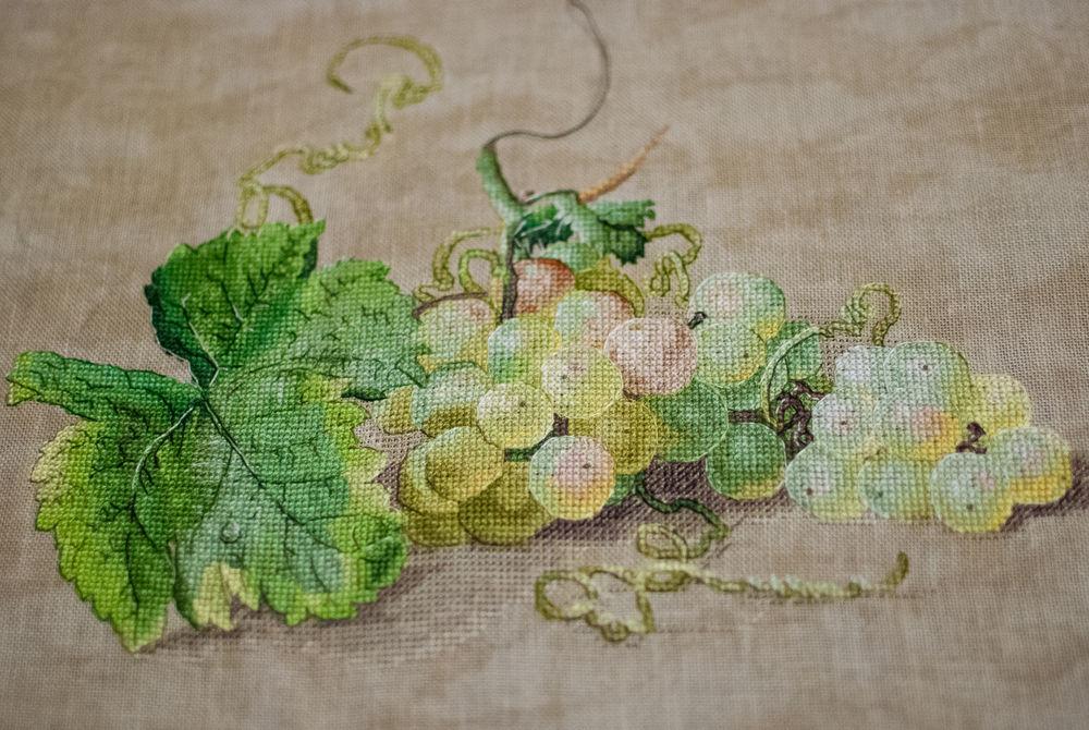 виноград, процесс работы