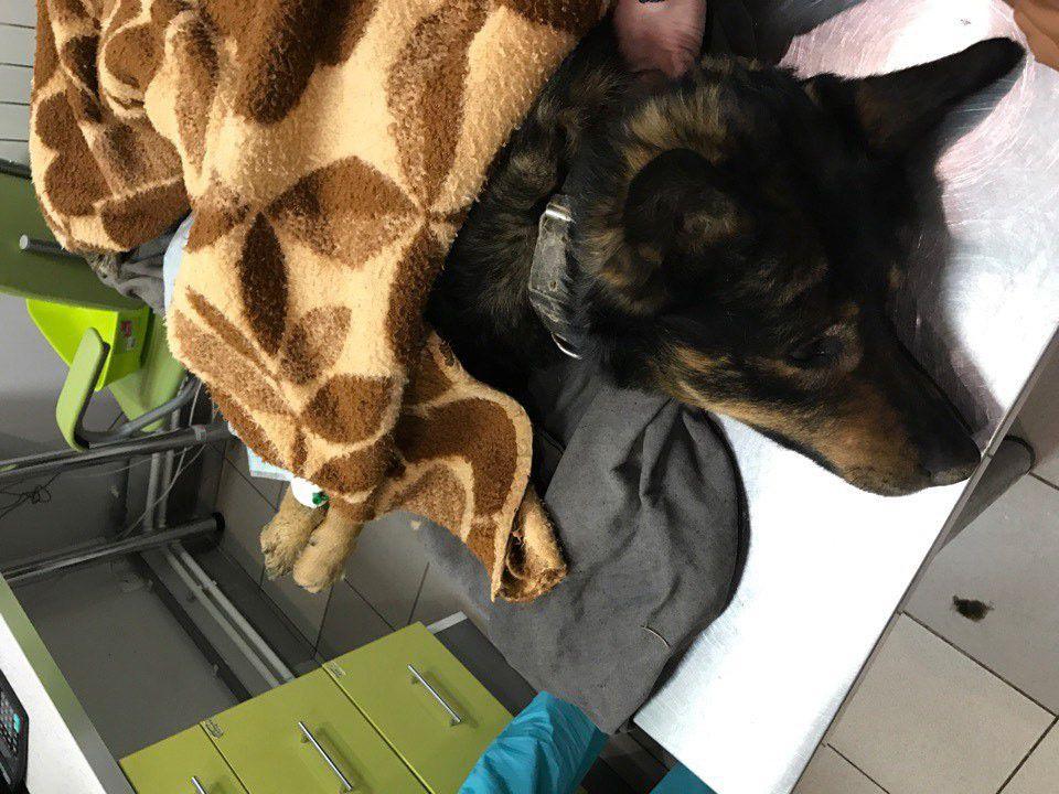 помощь, информация, волонтер, организация, животные, собака, лечение