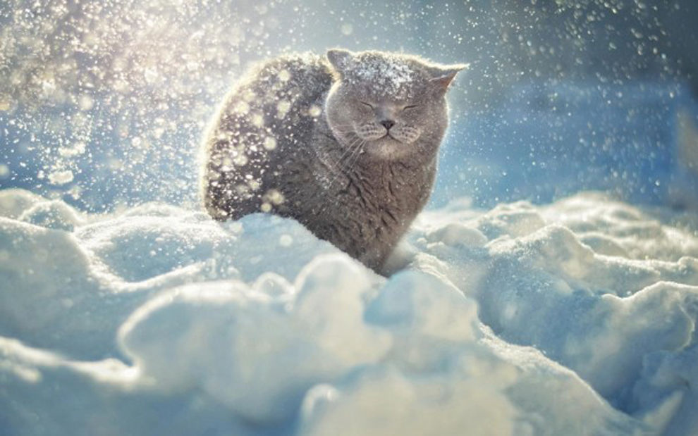 коты на снегу