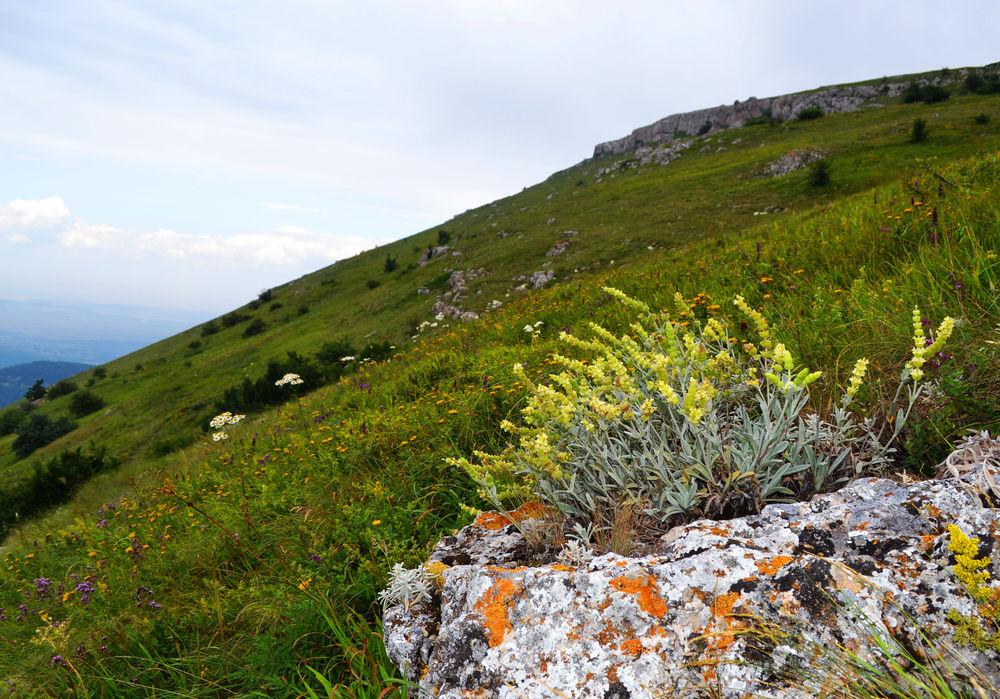 травы горного крыма картинки силиконовых