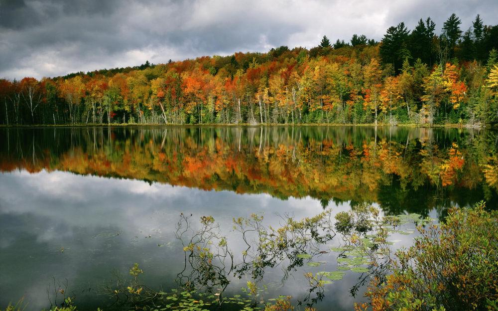 цвета природы