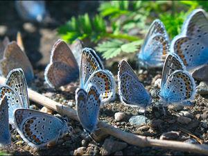 Бабочки переезжают!. Ярмарка Мастеров - ручная работа, handmade.