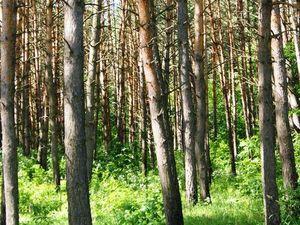 Поэзия леса и милые лесные жители. Ярмарка Мастеров - ручная работа, handmade.