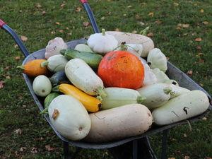 Сентябрь, урожай, мульча и мой опыт выращивания растений. Ярмарка Мастеров - ручная работа, handmade.