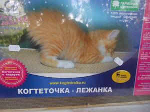 Подарок для кота | Ярмарка Мастеров - ручная работа, handmade