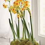 spring-flowers-new-ideas-narcissus1.jpg
