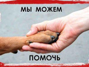 Благотворительный аукцион в помощь бездомным животным | Ярмарка Мастеров - ручная работа, handmade