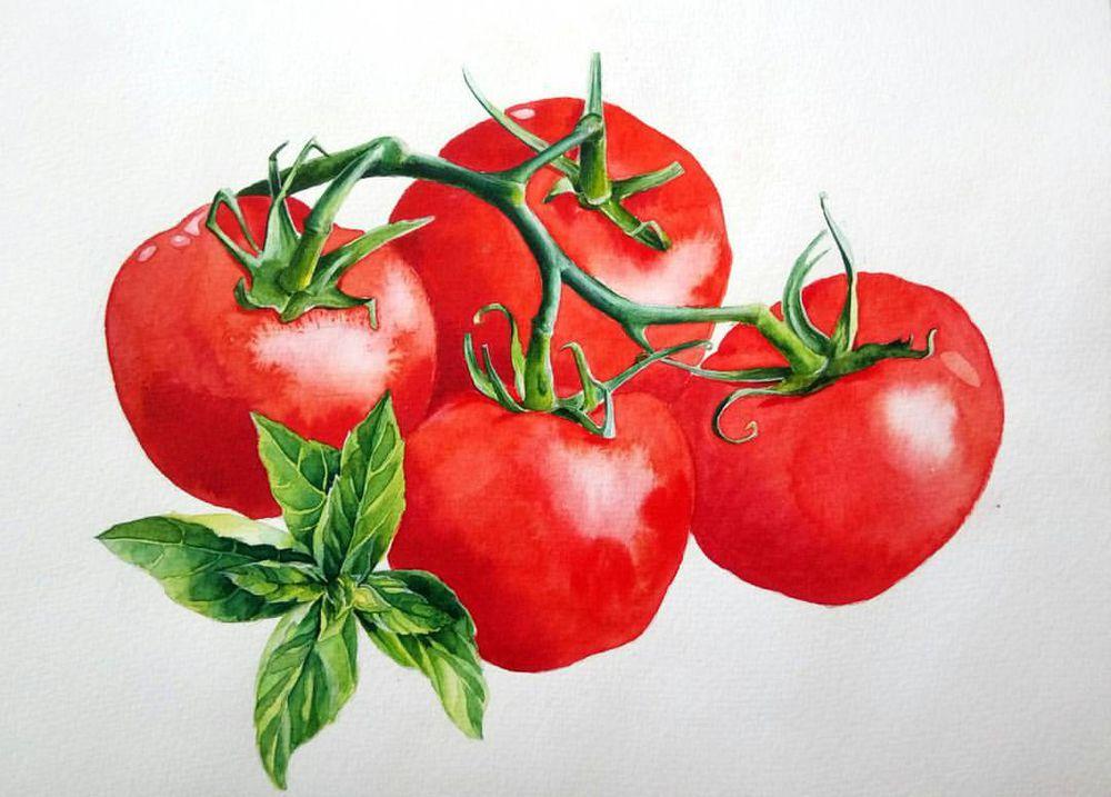 томат, картина для кухни, картина акварелью, как сделать, продажа, купить в москве, ботаническая живопись, ботаника