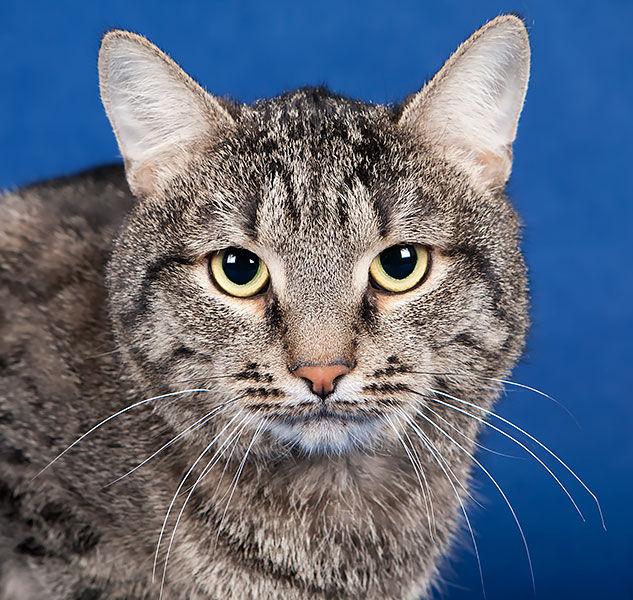 Полосатики и их друзья ищут дом! Каждой кошке — свою семью!!, фото № 6