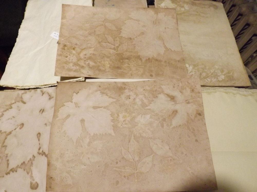бумага с эко-принтами