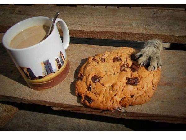 Юмористическая история  -  Кот, который слишком много ест :)   Ярмарка Мастеров - ручная работа, handmade