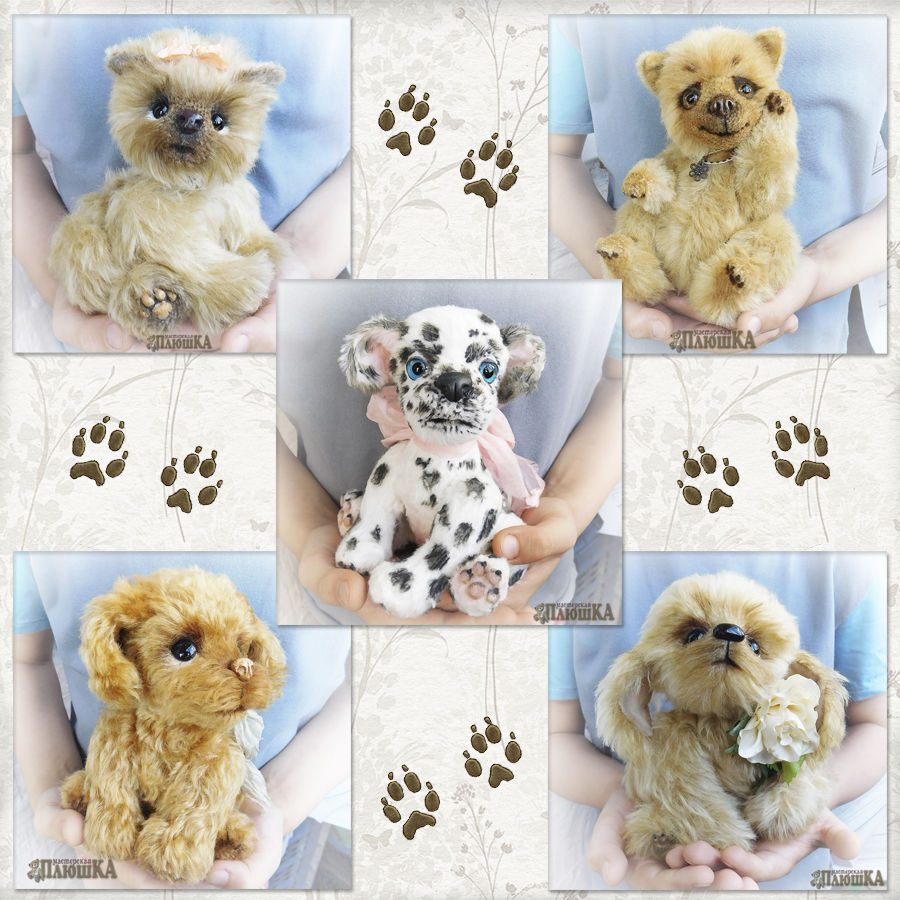 теддидрузья, друзьятедди, символ 2017 года, пес, пес тедди, онлайн обучение