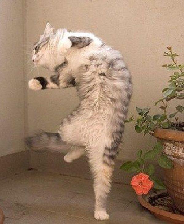 картинки с котами ура пятница его