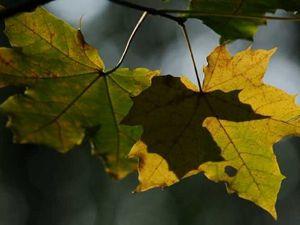 Вдохновляющая осень (фотографии). Ярмарка Мастеров - ручная работа, handmade.